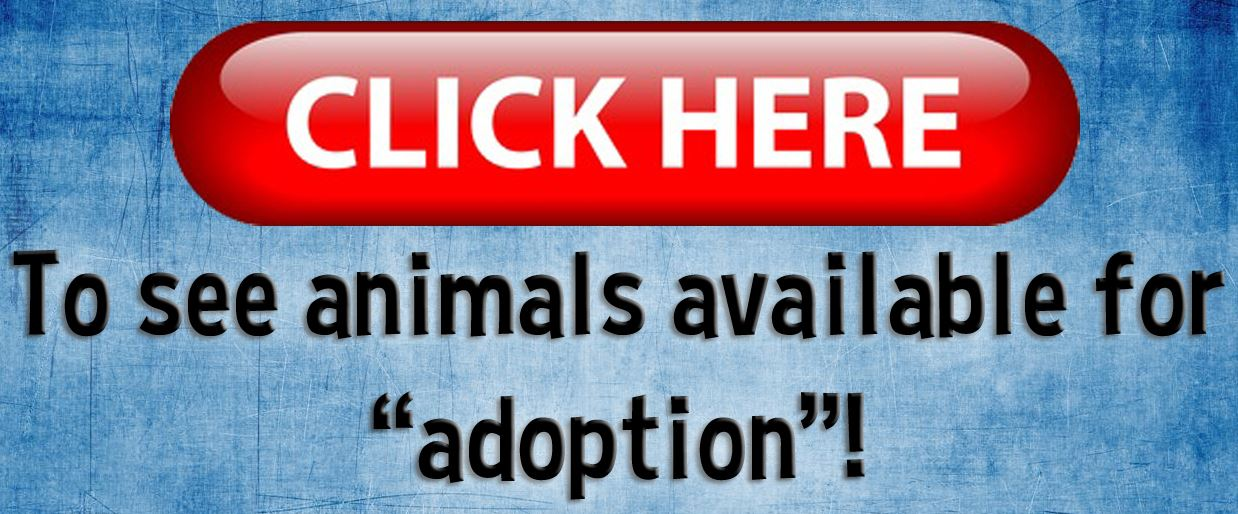 click-here-animals