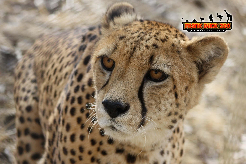 Frank Buck Zoo | Gainesville, TX - Official Website